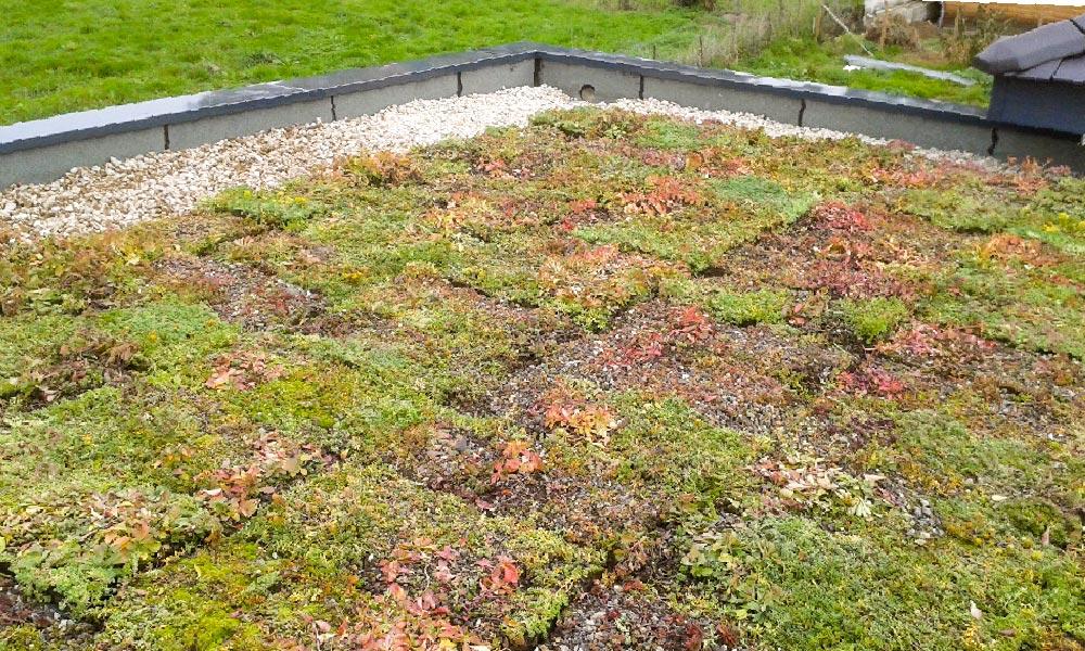 MJS Étanchéité de toit par végétalisation extensive