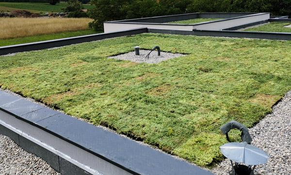 MJS Etanchéité de toit en végétalisation extensive