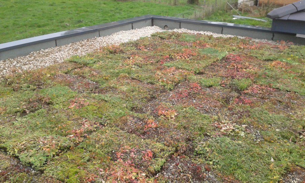 MJS-étanchéité-toiture-végétalisée